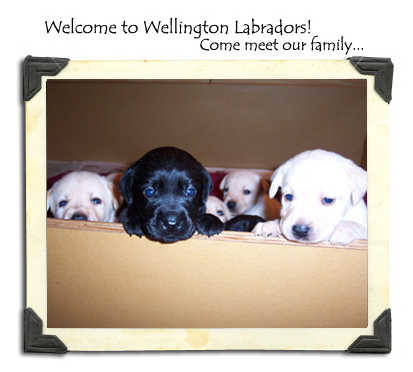 Welcome to Wellington Labs